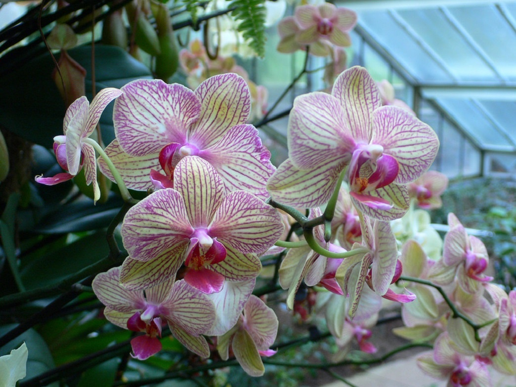 Close up of orchid flowers