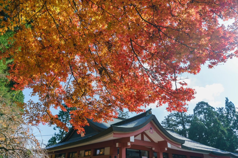 Enryaku-ji: War, Peace, and Beauty