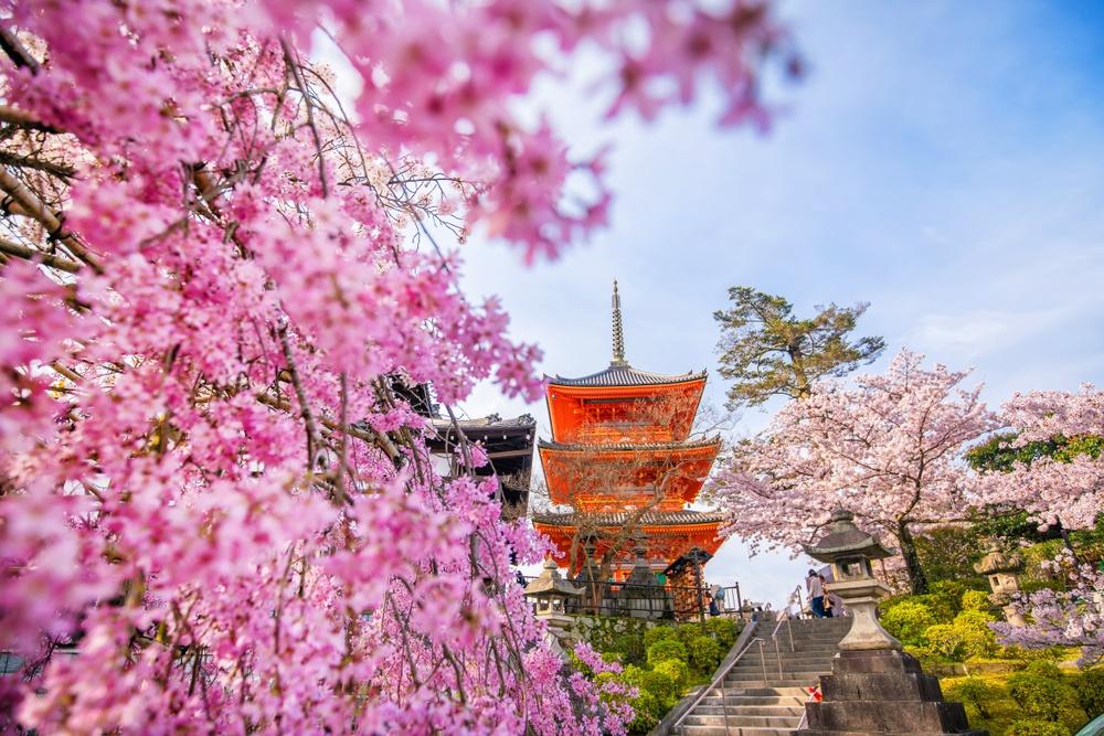 cherry blossoms in Osaka, Nara, and Kyoto in 2020