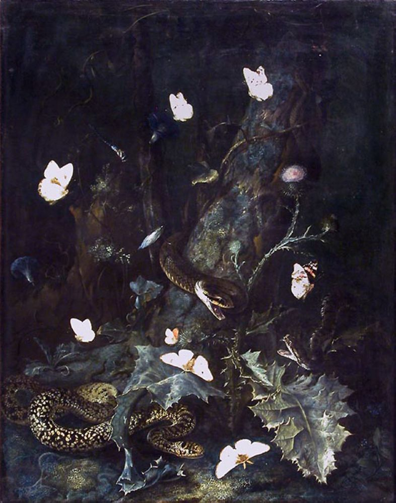 A Forest Floor with Snakes and Butterflies by Dutch painter Otto Marseus van Schrieck