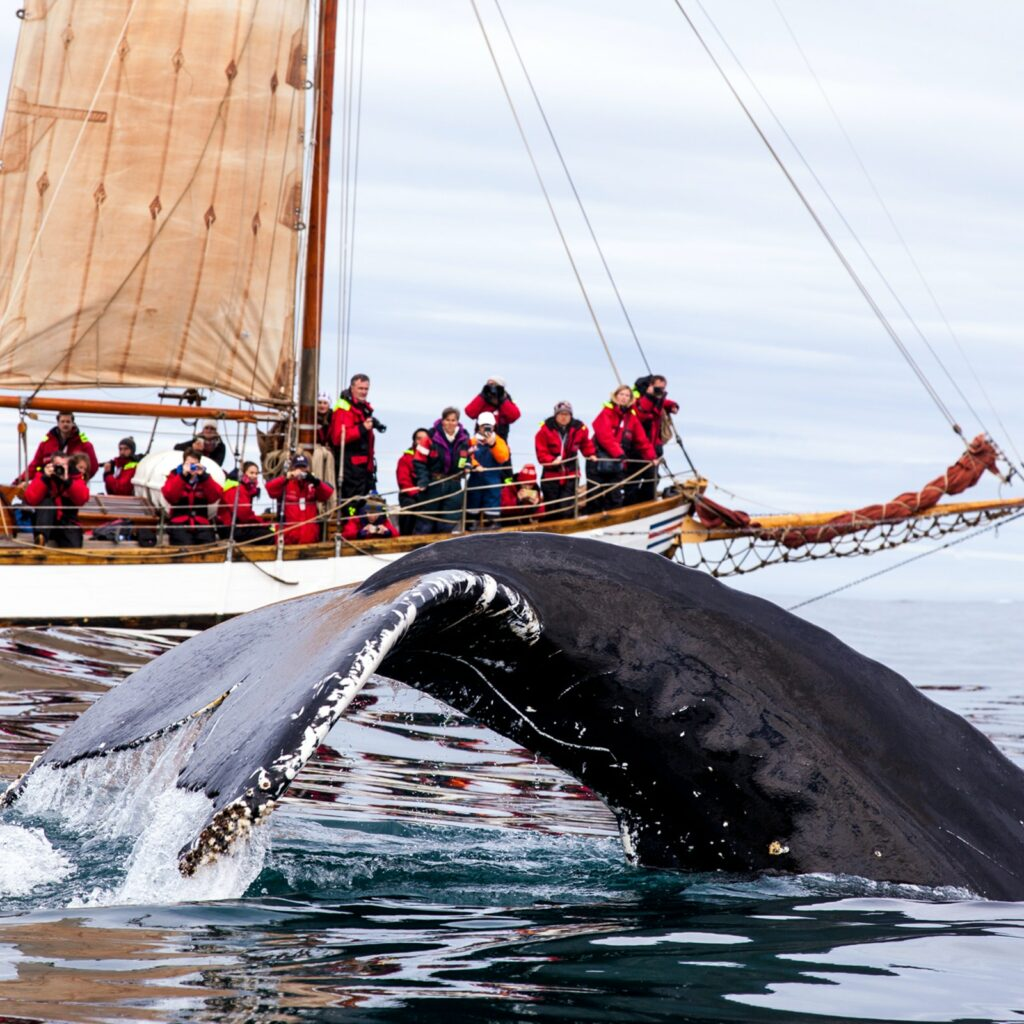 A whale disappears into the water while a boatload of people look on in amazement.