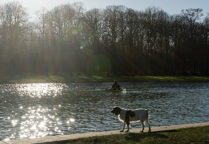 A dog on the edge of Versaille's Grand Canal with a rower on the water