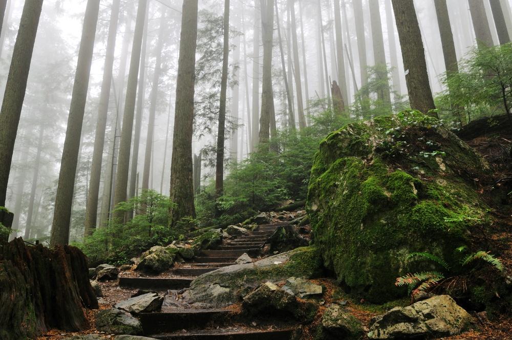A Grouse Mountain hiking trail.