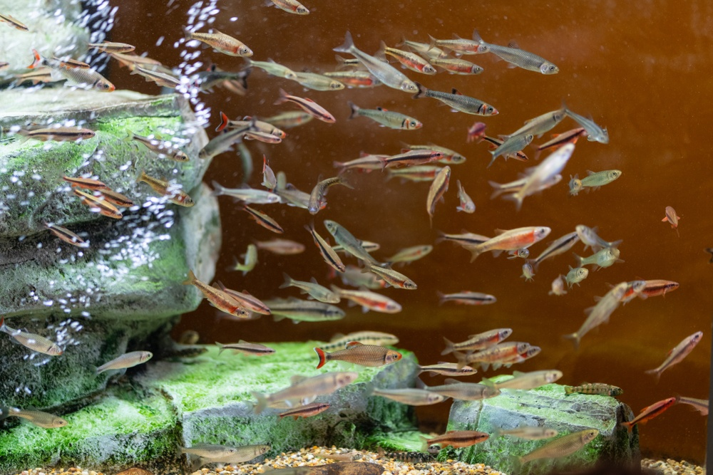 South Carolina only keeps native fish species, a responsible model for wildlife attractions.