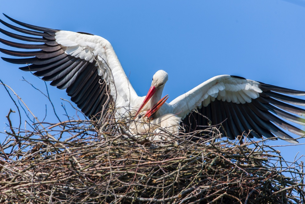 A stork nest - these Amsterdam birds can be found in Vondelpark, Westerpark, and more.