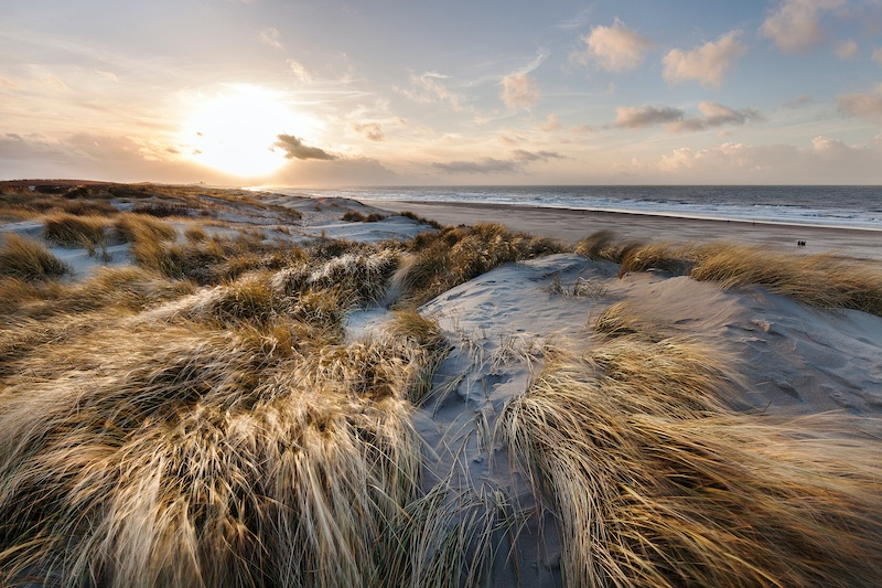 A picture of the dunes near one of the beaches in the hague